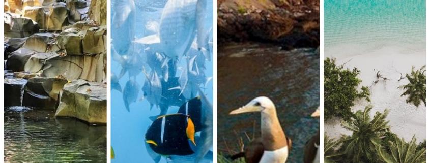 Riviera Nayarit medio ambiente