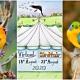 Riviera Nayarit, #VirtualBirdfair2020, #BirdWatching, birds