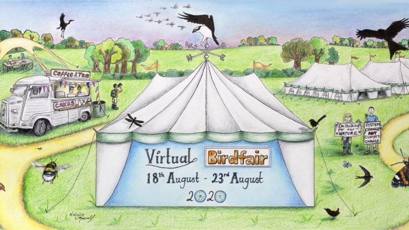 Riviera Nayarit, events, birds, #BirdWatching, #VirtualBirdFair2020