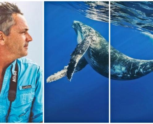 Riviera Nayarit, whales