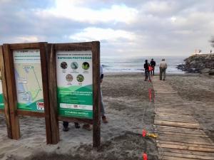 beach, Beach Cleanup