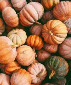 Thanksgiving Day, pumpkins