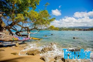 mar, playa, rocas en la playa, árbol junto a la playa