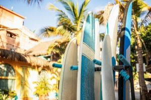 tablas de surf, surf, palmeras
